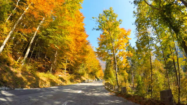 Driving on a scenic mountain road through autumn forest