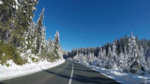 Driving on an empty road along forest in winter video