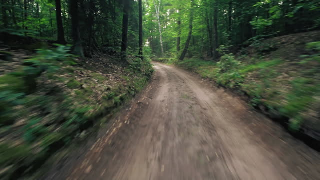 Driving on forest road video