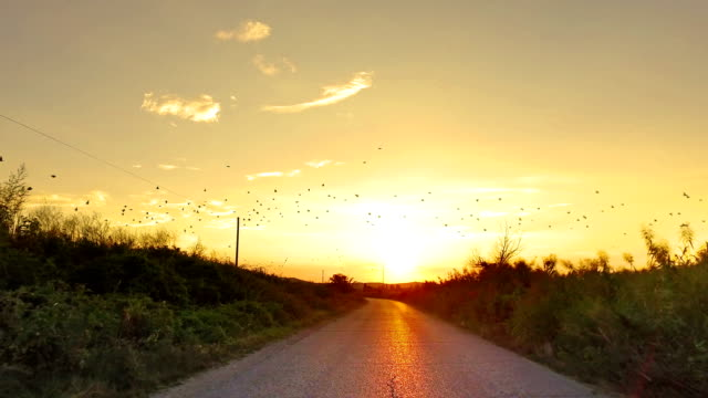 driving on rural asphalt road with orange sunset sky and flock of birds fly - wiejska droga filmów i materiałów b-roll