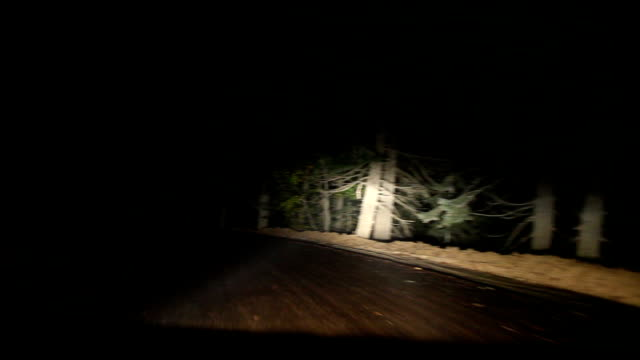 HD: Driving on Scary Forest video