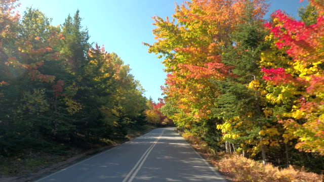 pov: driving on scenic highway through colorful fall foliage forest on sunny day - obficie ulistniony filmów i materiałów b-roll