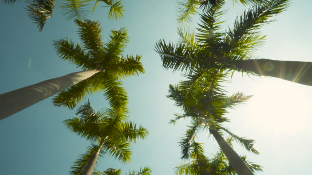Driving Palm Trees Passing by Under Sunny Blue Skies No People