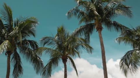 vidéos et rushes de conduire des palmiers sur miami beach - panoramique