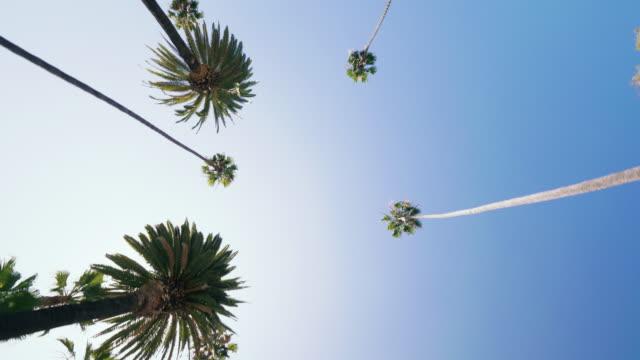 vidéos et rushes de conduite à travers un boulevard avec des palmiers en californie - vue en contre plongée verticale