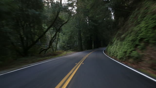 Driving through a redwood forest video
