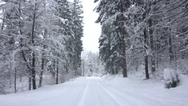 Driving Through A Snowy Forest video