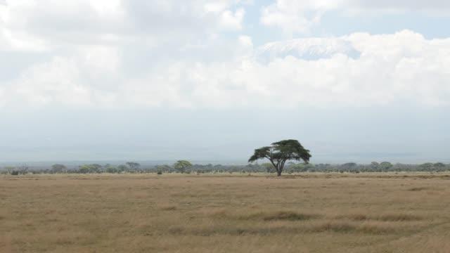 Driving through Amboseli National Park ft. Mt. Kilimanjaro (4K)