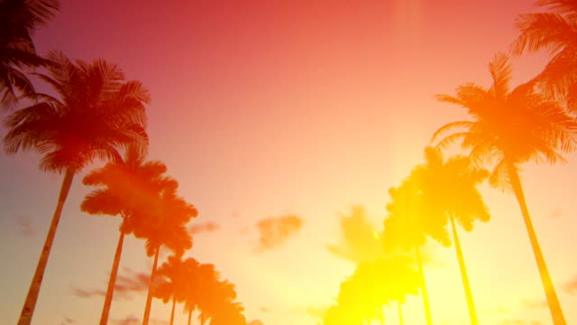 driving through an alley of palm trees at down - california video stock e b–roll