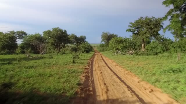 Driving through Chobe in Botswana. Driving through Chobe in Botswana. Camera moves forward. botswana stock videos & royalty-free footage