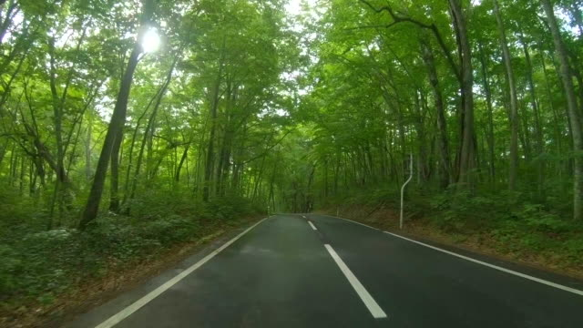 Driving Through Forest Rainy Road Driving Through Forest Road land vehicle stock videos & royalty-free footage