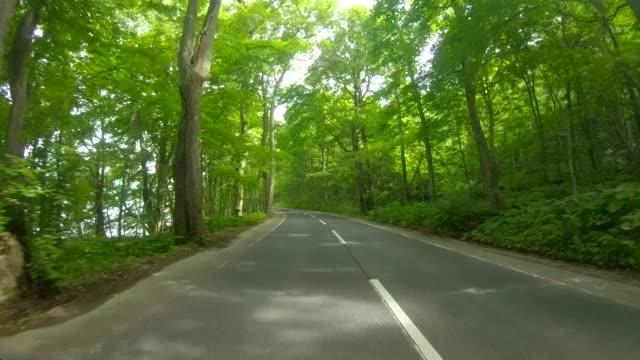 vídeos de stock e filmes b-roll de driving through forest road - reto descrição física