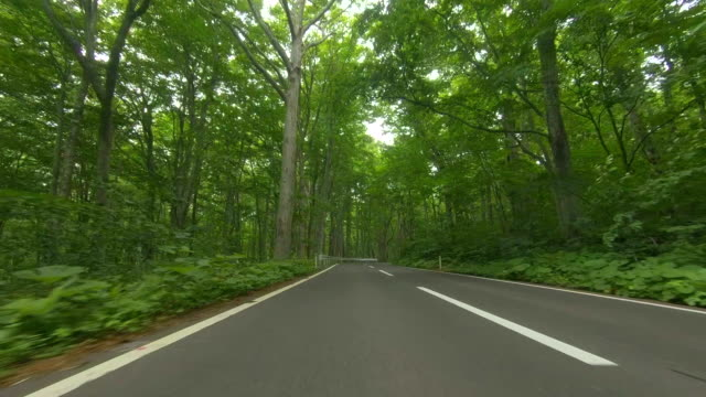 driving through forest road - strada tortuosa video stock e b–roll