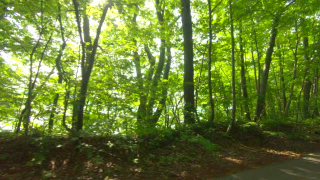 vídeos de stock e filmes b-roll de driving through forest road - driveway, no people