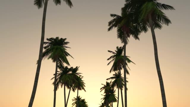 vidéos et rushes de conduite par le biais de palmiers au coucher du soleil - palmier