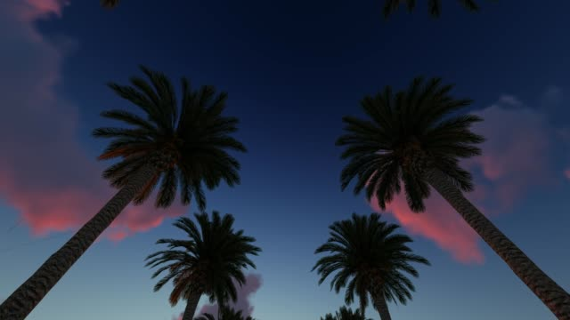 Driving through palm trees at the sunset