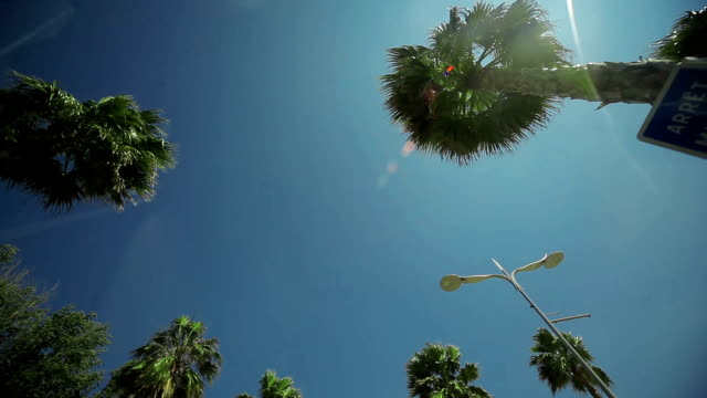 Driving through Palm Trees video