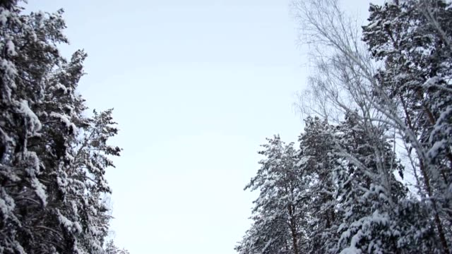 Driving Through Snowy Pine Forest in Winter video