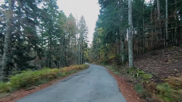 Driving through the forest in autumn