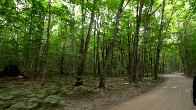 Driving through the forest in the upper peninsula in Michigan