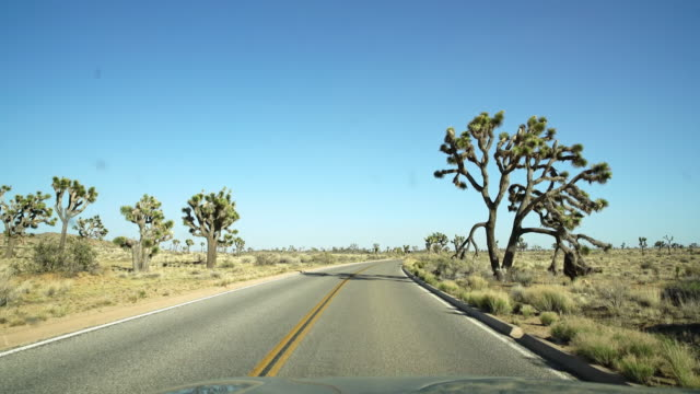 POV Driving through the Joshua Tree National Park video