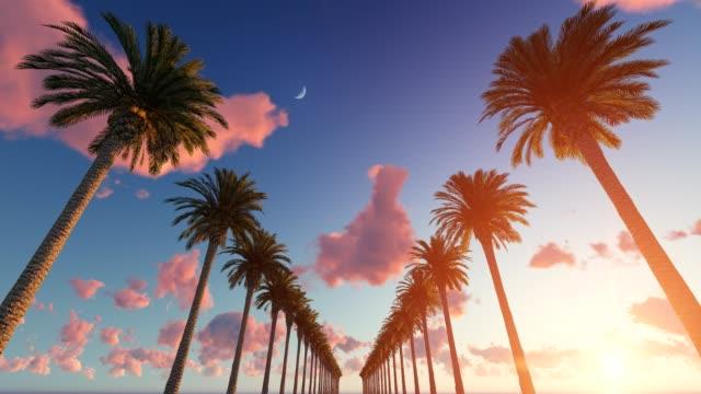 vidéos et rushes de conduire à travers les palmiers - arbre tropical
