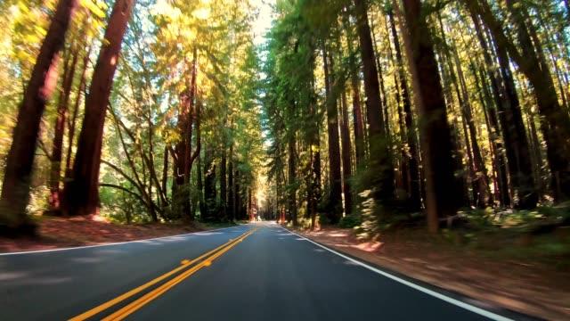 fahrt durch den redwood-wald in kalifornien - staatspark stock-videos und b-roll-filmmaterial