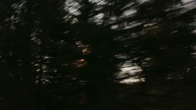 Driving through Yellowstone National Park, sun peeking through trees. video