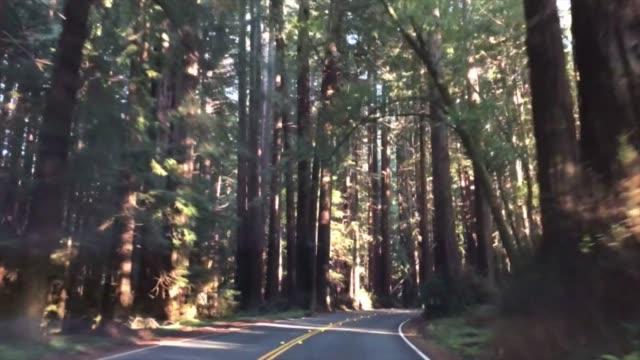 Driving trough a redwood forest