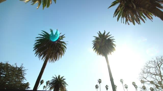 driving under palm trees in beverly hills, california, usa - проспект стоковые видео и кадры b-roll