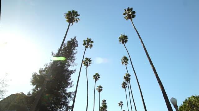 driving under palm trees in beverly hills, california - проспект стоковые видео и кадры b-roll