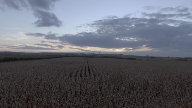 dron 1 - lleida stok videoları ve detay görüntü çekimi