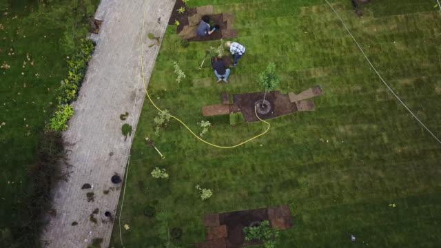 drone 4k video av trädgårdsmästare lägga gräset gräs mattan i parken. antenn bilder. quadcopter vy från ovan av arbetare plantera träd - gräsmatta odlad mark bildbanksvideor och videomaterial från bakom kulisserna
