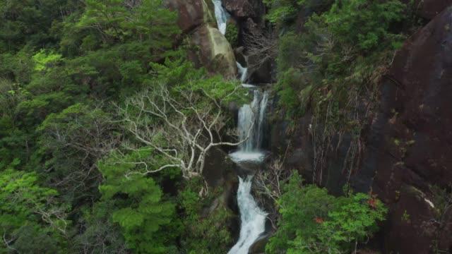 熱帯雨林の滝、自然の美しさと静けさのドローン空中映像。 - 清らか点の映像素材/bロール