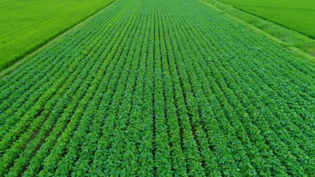 2017 年 8 月の夏に日本宮城県大崎市で野菜の畑の無人の空中写真 - 夏点の映像素材/bロール