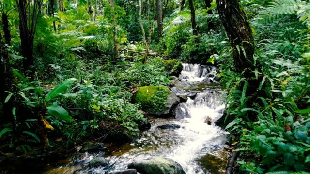 無人空中ショット アプローチ北タイの熱帯雨林の美しい小さな入り江と熱帯の滝。 - 湧水点の映像素材/bロール