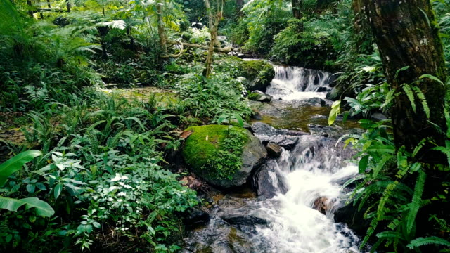 Drone Aerial Shot Approach to Tropical Waterfall with beautiful small creek in rain forest of north of Thailand video