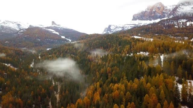drohne luftaufnahme der dolomiten winter kiefer wald wintersaison mit nebel und schnee schöne landschaft von italien berg - kieferngewächse stock-videos und b-roll-filmmaterial