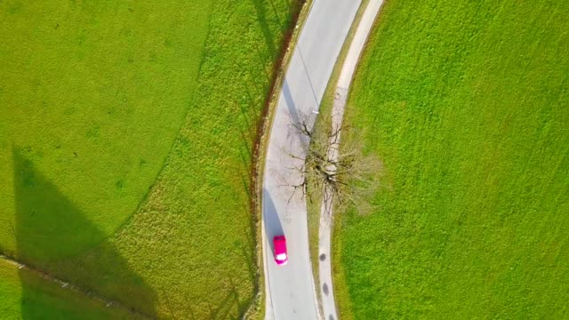 drone aerial view of farm with cow and green field countryside of germany - monti urali video stock e b–roll
