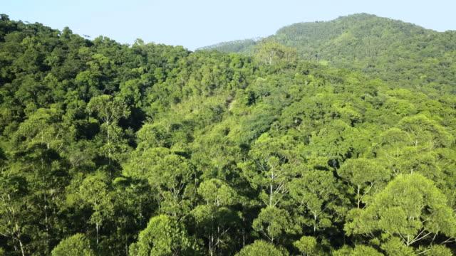 brezilya 'da bir amazon tropikal ormanda yaz yeşil ağaçların drone hava görünümü. - uzun fiziksel özellikler stok videoları ve detay görüntü çekimi