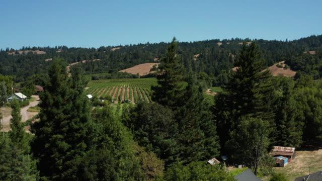drone aerial view of vineyard in anderson valley in northern california - paesaggio collinare video stock e b–roll