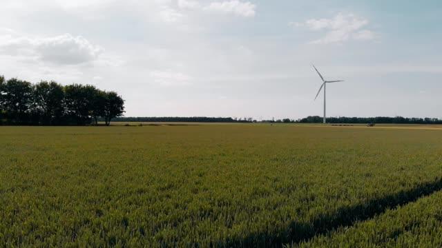 drone aerial view on a field - attività agricola video stock e b–roll