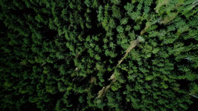 Drone ascending and rotating over forest road. Aerial 4K vertical zoom out background shot of quiet evergreen pattern video
