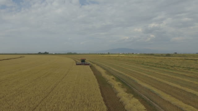 drone clip of working tractor combine harvester - erba medica video stock e b–roll