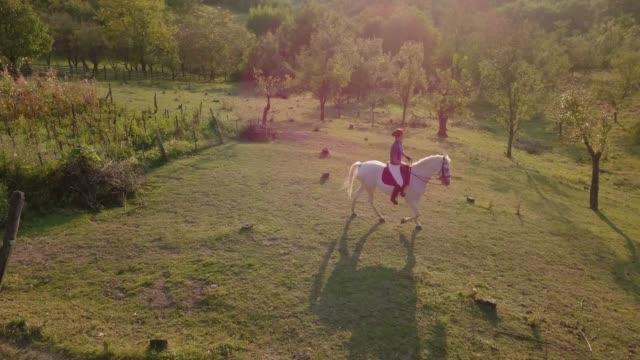 vidéos et rushes de femme étroitement tir de drone sur cheval blanc - dressage équestre