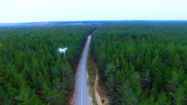 Drone, copter flying over forest monitoring area video