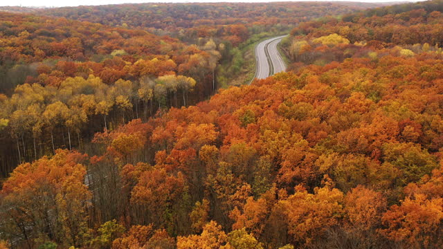 Drone Dolly Out Flying Over Yellow Foliage Dense Deciduous Trees in Autumn