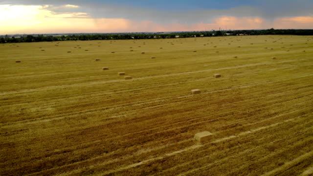 vidéos et rushes de le drone vole au-dessus du champ de chaume avec des balles de paille sous le ciel de coucher du soleil avec les nuages colorés - foin