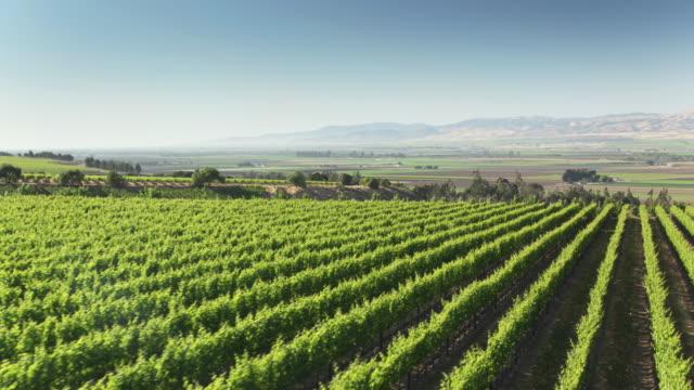 drone flight along rows in vineyard in monterey county, ca - azienda vinicola video stock e b–roll