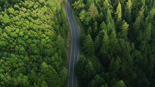 vídeos de stock e filmes b-roll de drone flight over empty road through forest - estrada 001